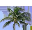 南米インディオの伝承植物成分ババス